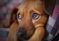 Депутаты посоветовали властям Читы оперативнее решать «собачий вопрос»