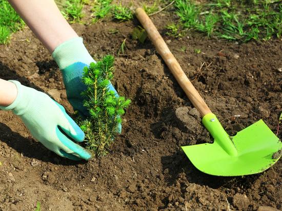 «Мой зелёный Иркутск» даст городу более 700 саженцев