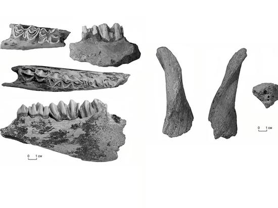 В Крыму открыто древнейшее пещерное местонахождение ископаемых животных в России