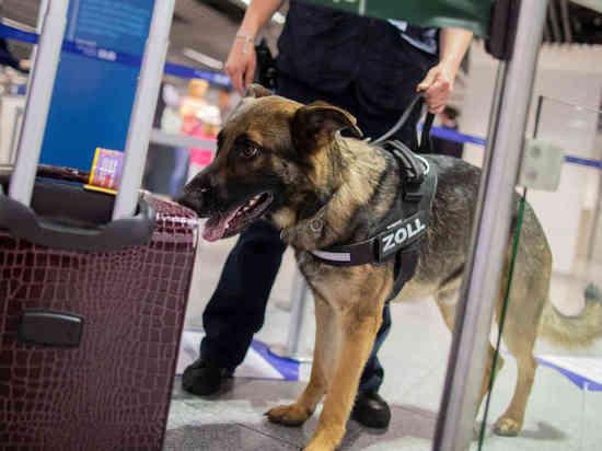 Дюссельдорф: собака-пограничник нашла 1,2 миллиона евро