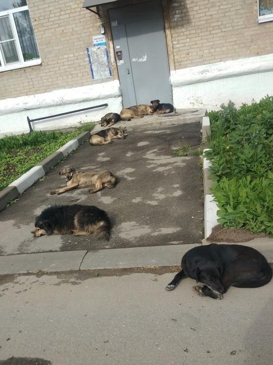 В Тульской области ребенок снова стал жертвой бродячих собак