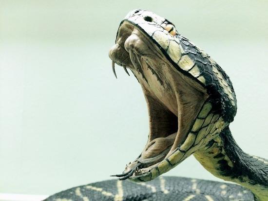 Змеи кусают змей: ученые пришли к оригинальному выводу