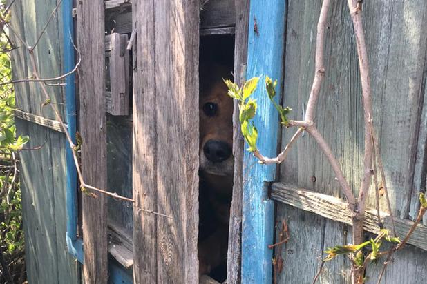 В Нижегородской области обнаружили концлагерь для собак