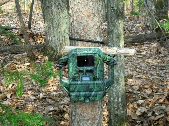 Городские леса Иркутска снабдят видеонаблюдением
