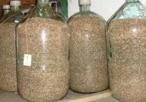 В Хакасии создан страховой фонд семян сосны