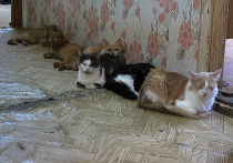 Два десятка кошек развела в квартире жительница Ноябрьска