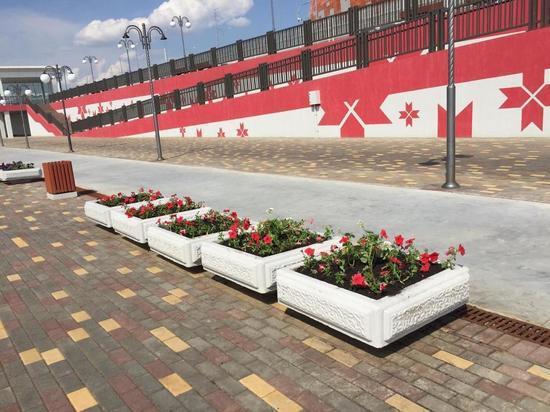 В Саранске высадят 566 тысяч цветов