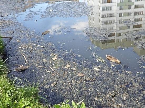 «Пулково» вложит 100 миллионов в очистку реки Новая