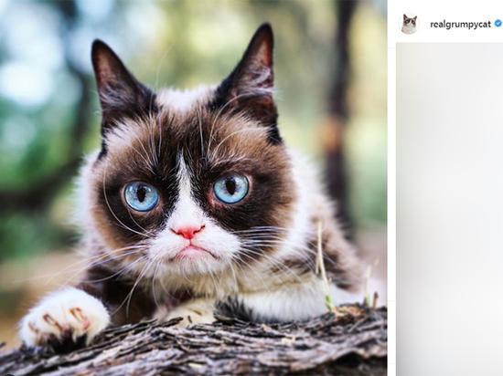 Умерла Grumpy cat, одна из самых знаменитых кошек в интернете