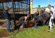 Медведи с автозаправки в Тверской области перебрались ближе к Москве