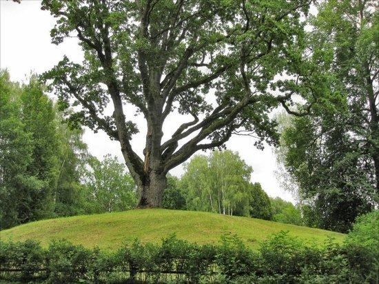 Псковичей призывают голосовать за дуб в Тригорском на конкурсе «Российское дерево года 2019»