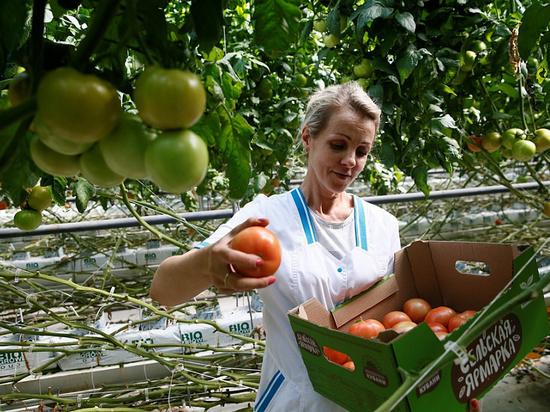 Аграрии Краснодарского края в этом году собрали 35 тысяч тонн овощей