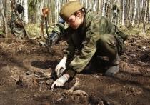 Под Балтийском калининградские поисковики обнаружили останки еще более 30 советских солдат