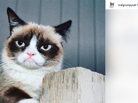 Зоопсихолог не исключила, что знаменитую грустную кошку могла погубить слава