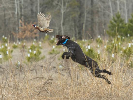 На Вологодчине подводят итоги сезона весенней охоты