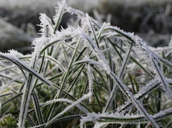 В Ульяновской области ожидаются ночные заморозки до - 3