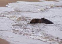 Глава Янтарного снял в море еще одну «дичь морскую»
