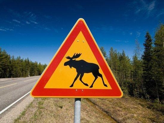На трассе Ярославль-Рыбинск ВАЗ сбил лося