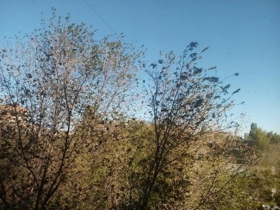 Сегодня в Оренбуржье будет ветрено и даже морозно
