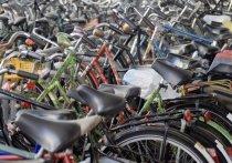 «На роликах и велосипедах»: министр спорта предложил освободить на выходные от автотранспорта центр Барнаула