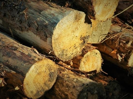 Жителя Карелии лишили свободы за вырубку одного дерева