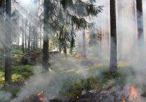 Неизвестные подожгли беловский лес