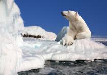 Зоологи «Роева ручья» рассказали о вымирании белых медведей