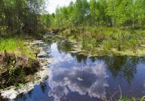 Восточную клушу впервые встретили в Калужской области