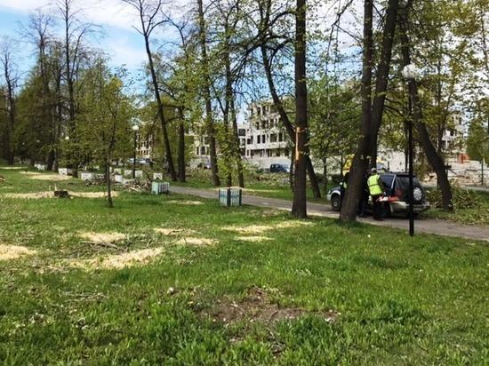 На Левашовском бульваре сносят аварийные деревья