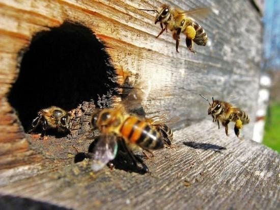 В центре Калининграда появился пчелиный рой