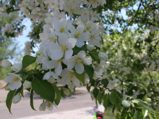 До 25 градусов тепла ожидается в Забайкалье 21 мая