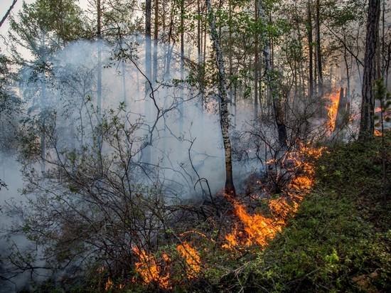 20 мая в Ивановской области горели баня, нежилой дом, лесной массив