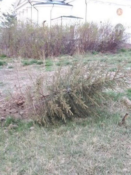 На «Иерусалимской горе» вандалы вырвали деревья