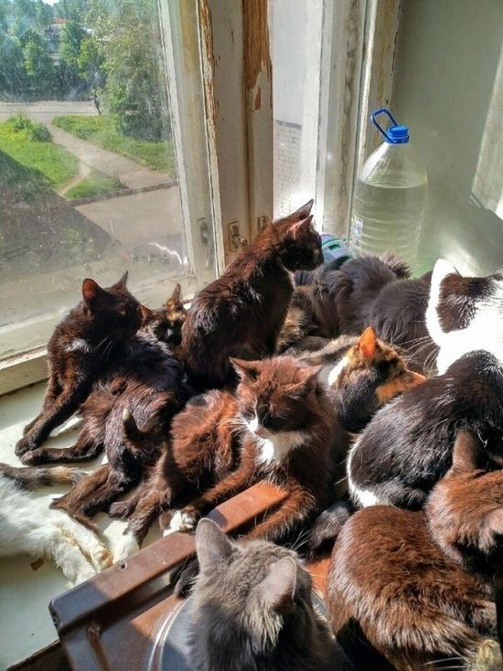 В Ярославле волонтеры пытаются расселить 50 кошек одной хозяйки