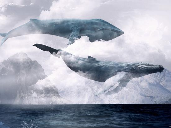 Правда ли, что игра «Синий кит» толкает детей к суициду?