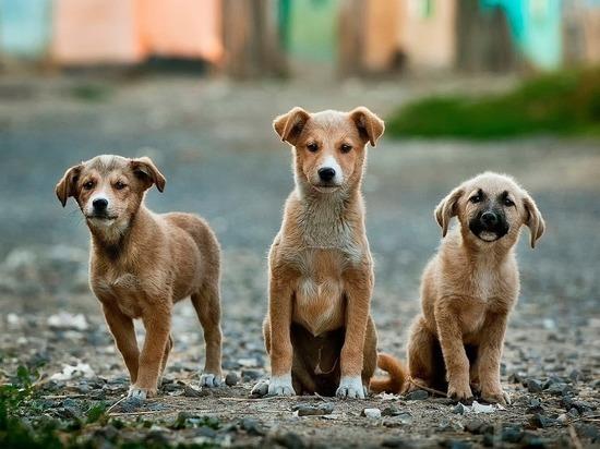 Отлов собак в Забайкалье хотят поручить спецорганизациям