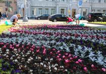 В Воронеже появятся 200 новых цветников