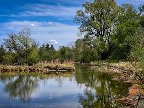 В Татарстане из-за халатности  в пруду погибли рыбы