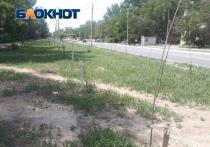 В Астрахани погибли деревья, высаженные чиновниками