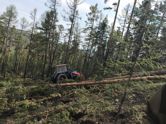 МВД Бурятии показало трактор «черного лесоруба»