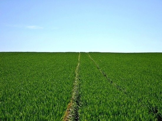 Тюменские аграрии трудятся не покладая рук