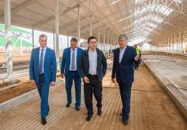 В Ивановской области уже в этом году построят ферму на 1200 голов крупного рогатого скота