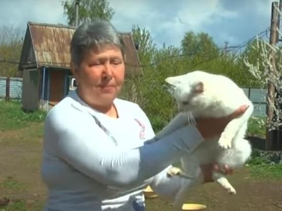 Дома у жительницы Шипуново живут 36 кошек и собак