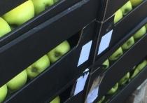 На базе в Оренбурге обнаружили опасные яблоки