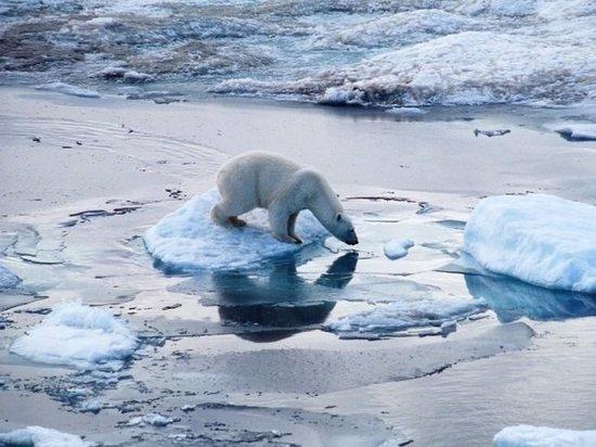 Учёные предсказывают скорое изменение арктической фауны и исчезновение видов