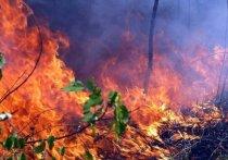 За выходные в лесах Приангарья ликвидировали 13 пожаров