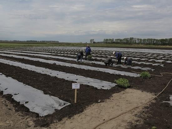 Модернизированный склад построят на ульяновской агрофирме «Лаишевская»