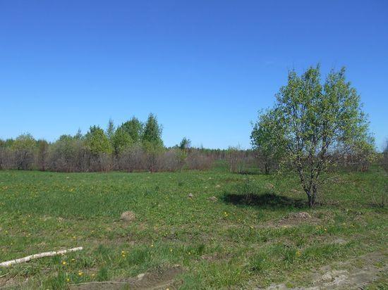 Собственник земель в Тверской области не смог скосить 103 гектара
