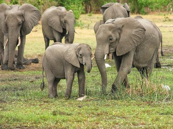 Слонам и носорогам предсказали скорое исчезновение