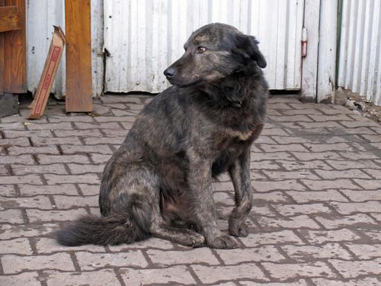 Покусанный собакой в Подмосковье ребенок пытался поиграть с ее щенками